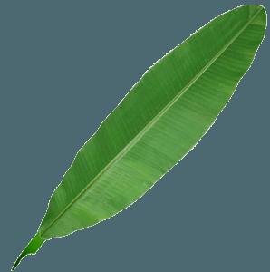 pen, leaf, emma sidney, digital, copywriting